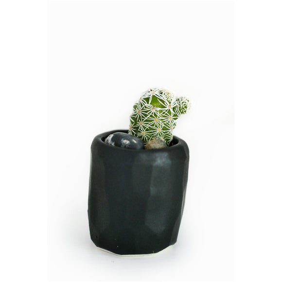 Mini Cactus Kit-Black
