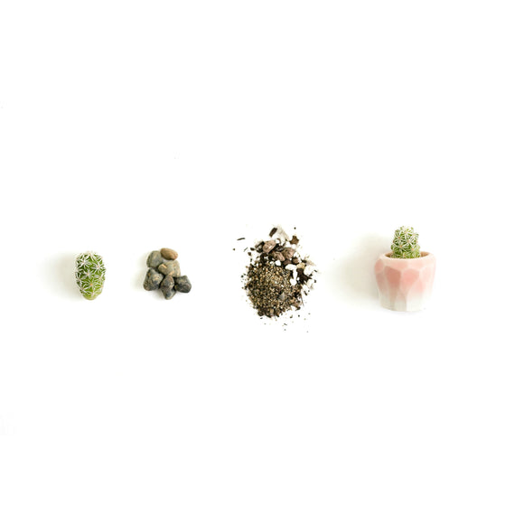 Itty Bitty Mini Cactus Kit