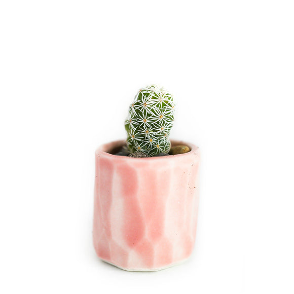 Mini Cactus Kit-Pink
