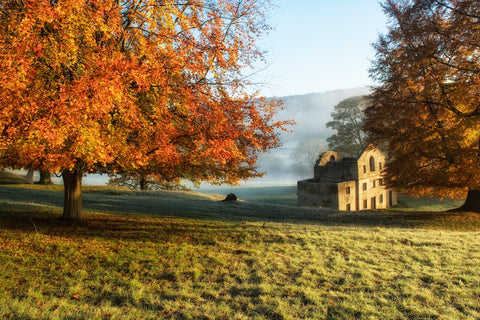Autumn Gold Chatsworth Print