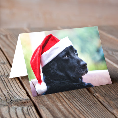 Bumbilicious Christmas -  Labradorable Card Christmas Collection