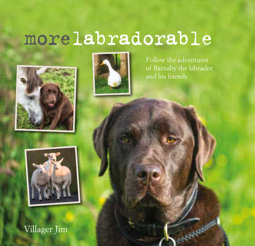 More Labradorable - Barnaby and friends, at home, at large, and at play