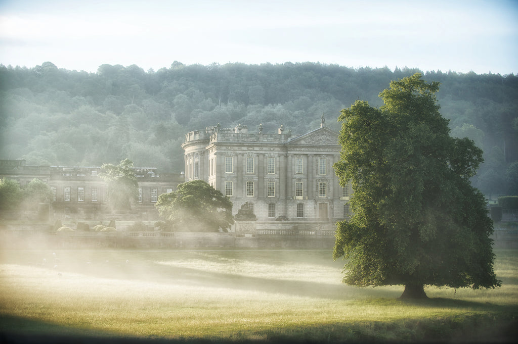 Chatsworth Tree Mist - Landscape Canvas