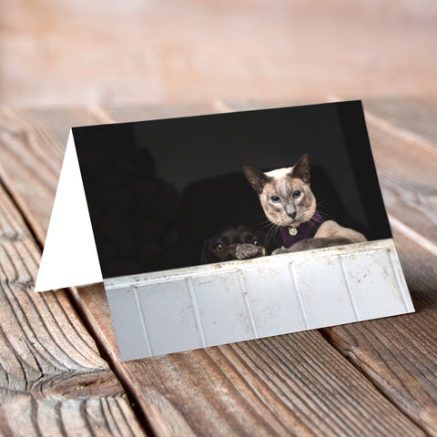 Greeting Card - Cool for Cats