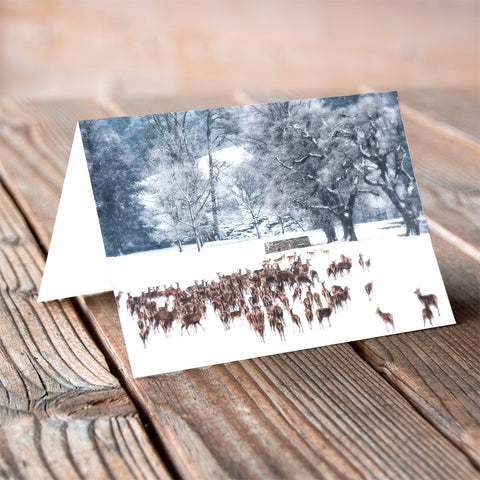 Winter Gathering - Christmas Card