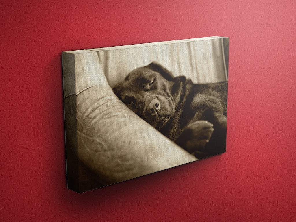 Dilly Creases Labrador Canvas