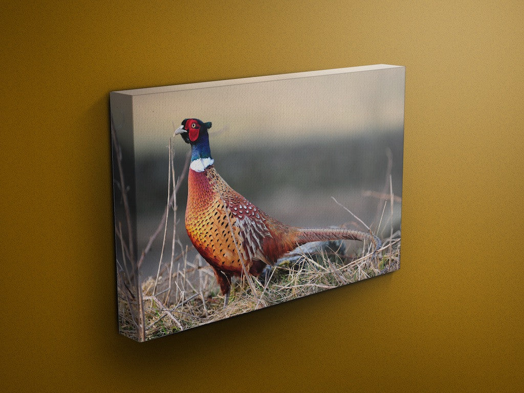 Field Pheasant Chatsworth Canvas
