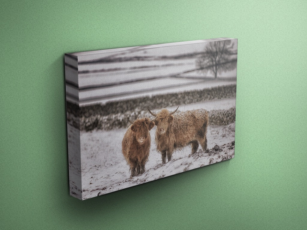 Gingerbread & Icing - Cow Canvas