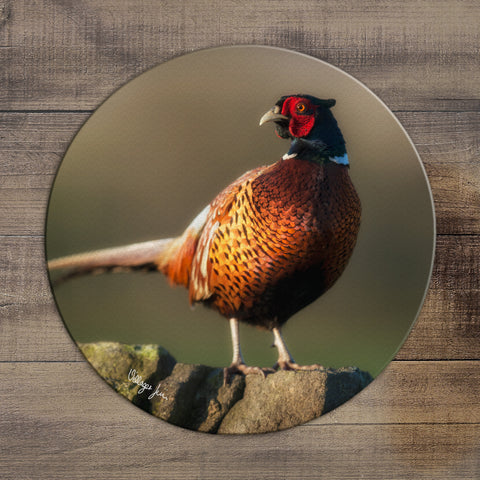 Golden Pheasant - Circular Glass Worktop Saver