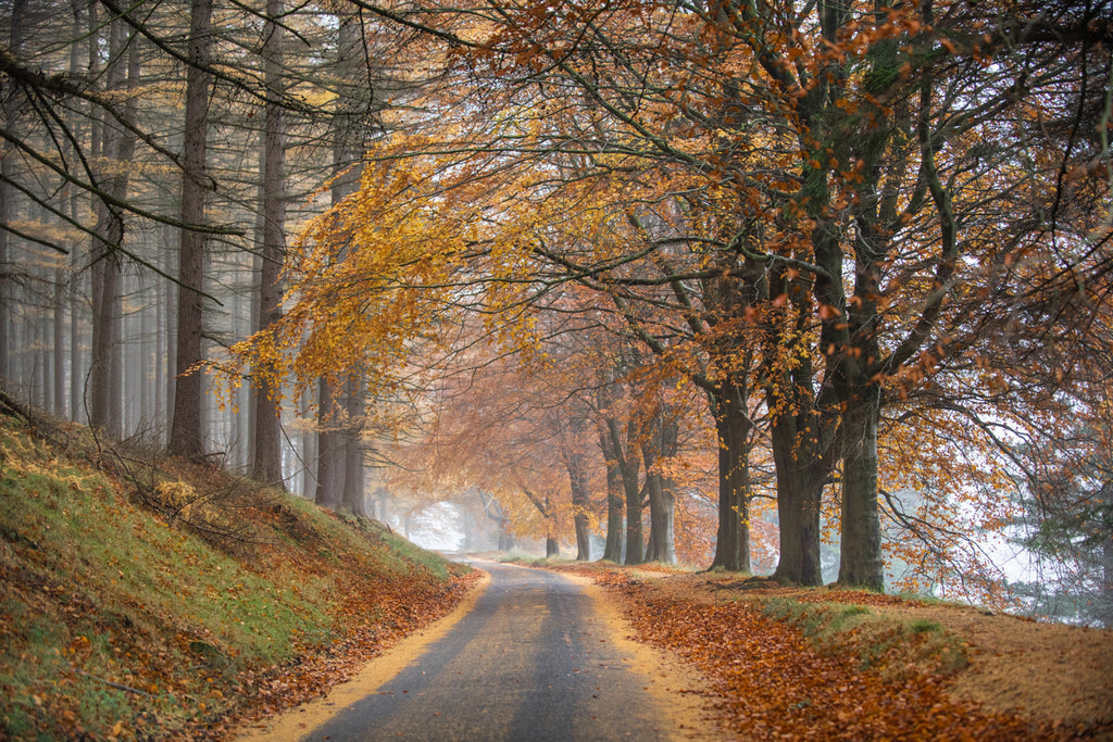 Howden Autumn Canvas