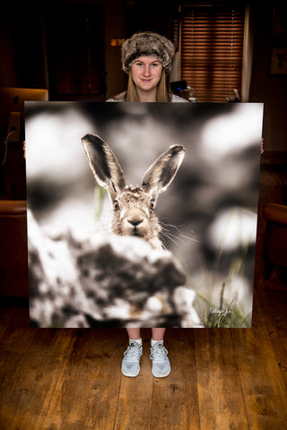 JUMBO ART - CAUGHT SHORT HARRY  - HUGE 1 Metre Square Canvas