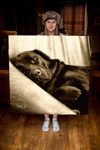 JUMBO ART - DILLY CREASES - HUGE 1 Metre Square Canvas