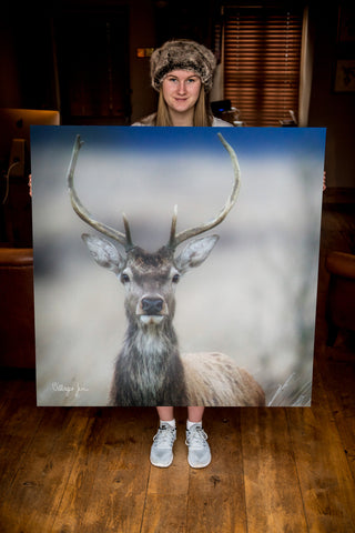JUMBO ART - RUMBLED RED DEER - HUGE 1 Metre Square Canvas