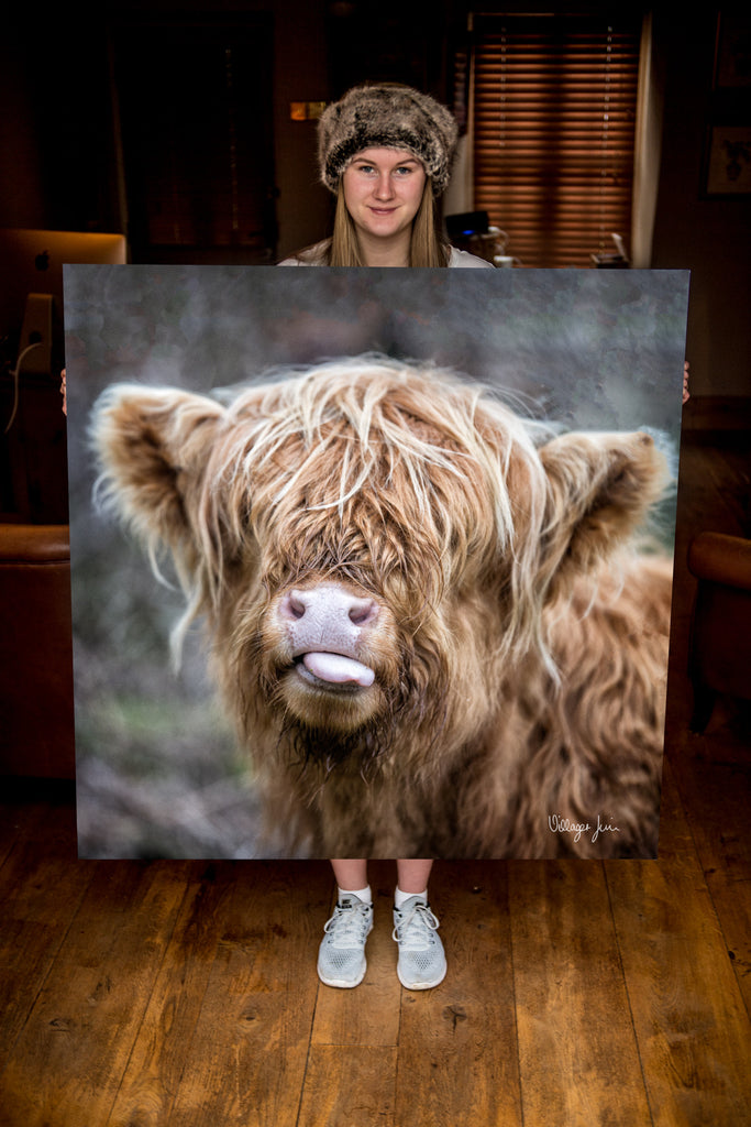 JUMBO ART - RASPBERRY COW  - HUGE 1 Metre Square Canvas