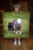 JUMBO ART - TOY SHEEP FAMILY  - HUGE 1 Metre Square Canvas