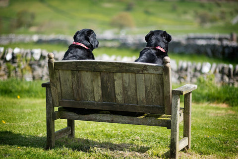 Two Fat Ladies Labrador Print