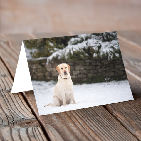 Labradorable Snowfall - Christmas Card