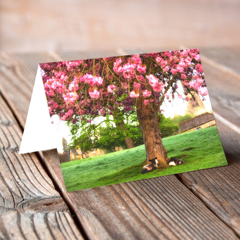 Greeting Card - Lambs and the Blossom Tree