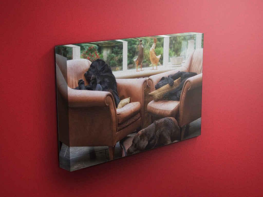 Let Sleeping Dogs Lie Labrador Canvas