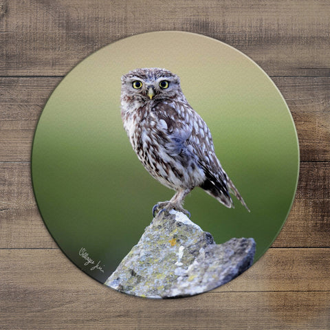 Little Owl - Circular Glass Worktop Saver