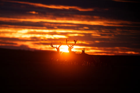 Stag Sunrise - Deer Print
