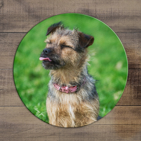 Little Terrier - Circular Glass Worktop Saver