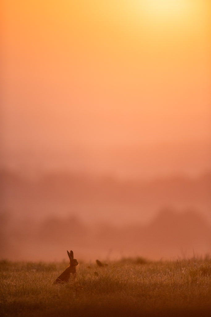 The Hare and the Pastel Dawn- Landscape Print