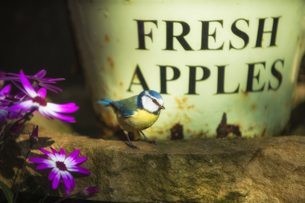 Fresh Apples  - Garden Bird Print