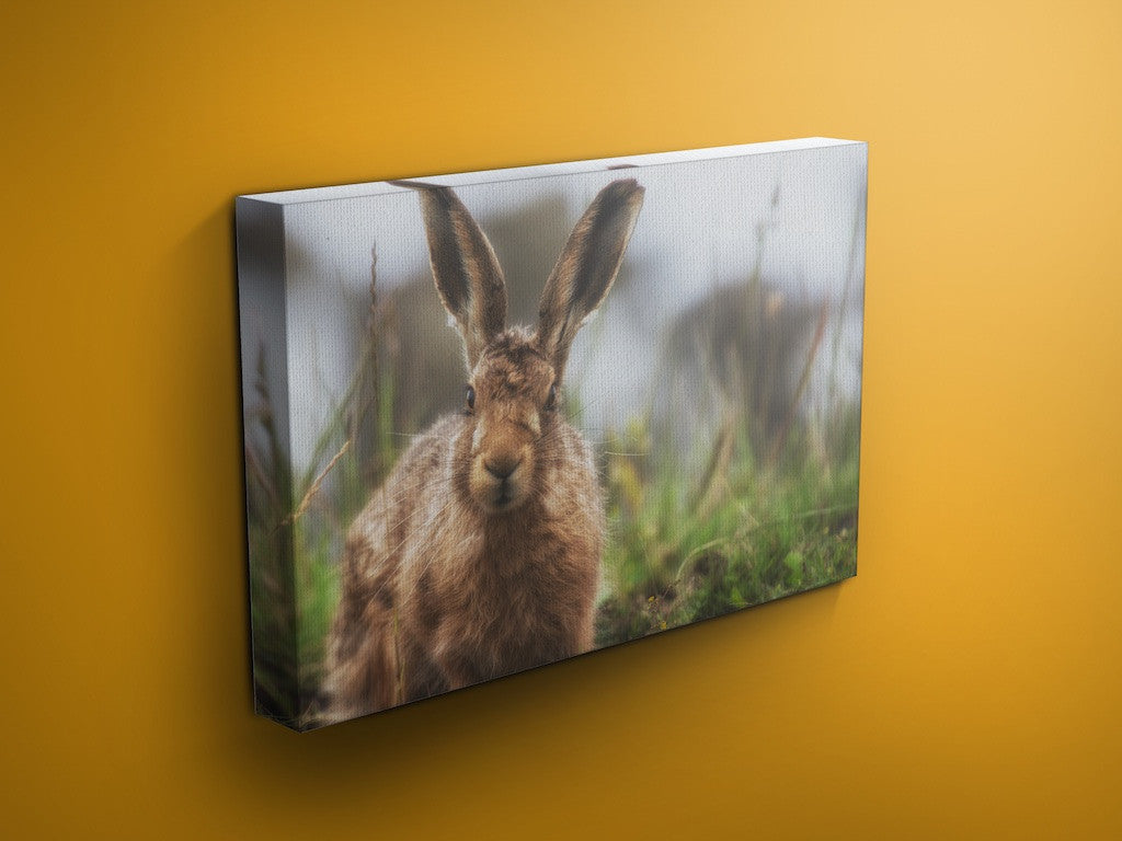 Harry Hare - Hare Canvas