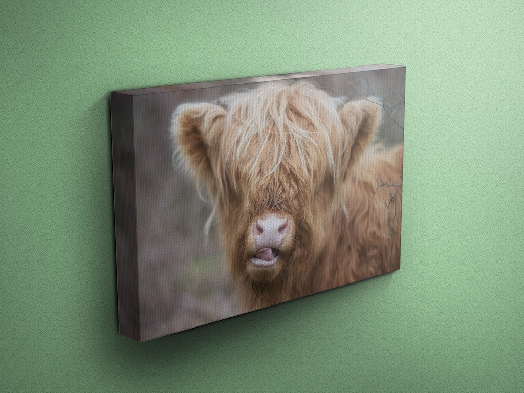 A Sexy Cow - Cow Canvas