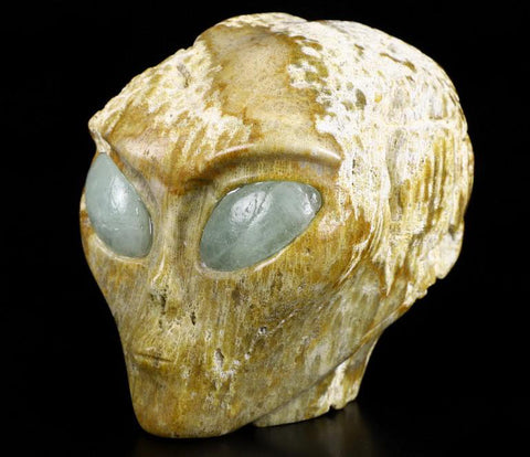 Coral Fossil Geode Natural Crystal Skull with Aquamarine Eyes