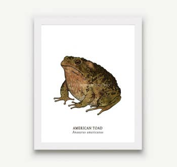 Toad Animal Prints - 5 x 7