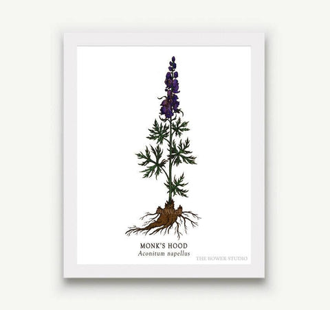 Monk's Hood Botanical Prints - 5 x 7