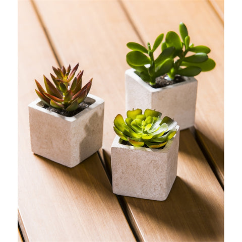 Artificial Succulent in Square Pot