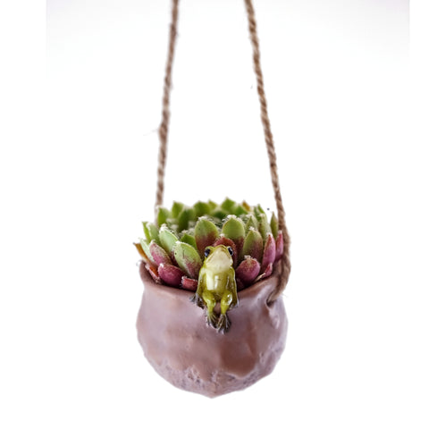 Mini Frog Hanging air Planter