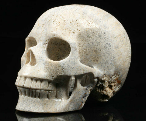 "Large 5.1"" Coral Fossil Natural Crystal Skull"