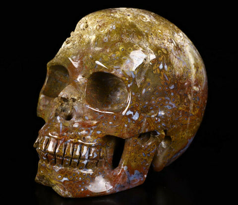 Crazy Lace Fossil Natural Crystal Skull 5.1""