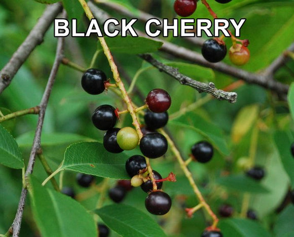 * BLACK CHERRY * E-Liquid Vape Fluid Juice - Choose your Nicotine Level, PG/VG mix & bottle size