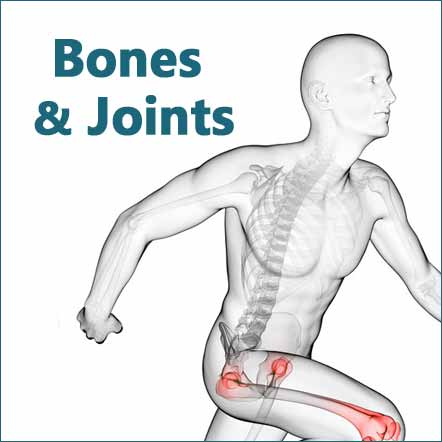natural herb and supplement bone and joint health image