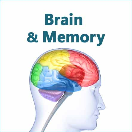 herbs and supplements for brain health, memory and cognitive support