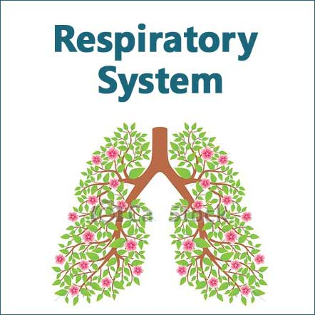 herbs and supplements for healthy respiratory system