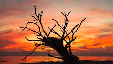 Time-lapse Big Sur: Bird Nest Sunset