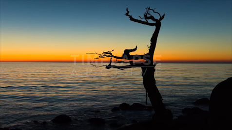Time-lapse Big Sur: Ghost Tree Blue Hour