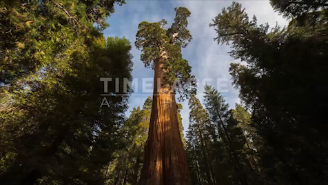 Time-lapse Yosemite: General Grant Sequoia