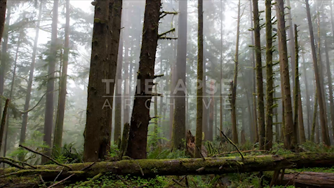 Time-lapse Oregon: Valley of the Giants Fog