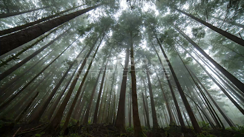 Time-lapse Oregon: Valley Of The Giants