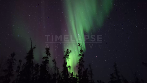 Time-lapse Northwest Territories: Aurora Trees