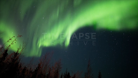 Time-lapse Northwest Territories: Aurora Stars & Trees