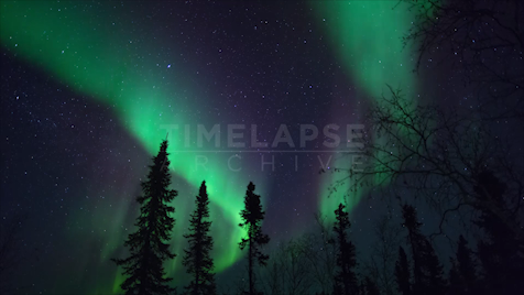 Time-lapse Northwest Territories: Aurora Trees & Stars