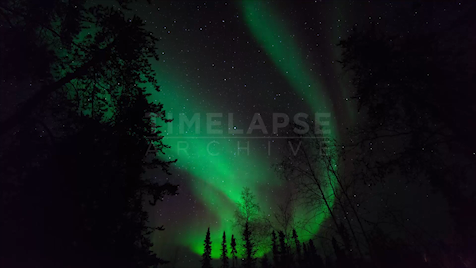 Northwest Territories: Aurora Tracking Trees